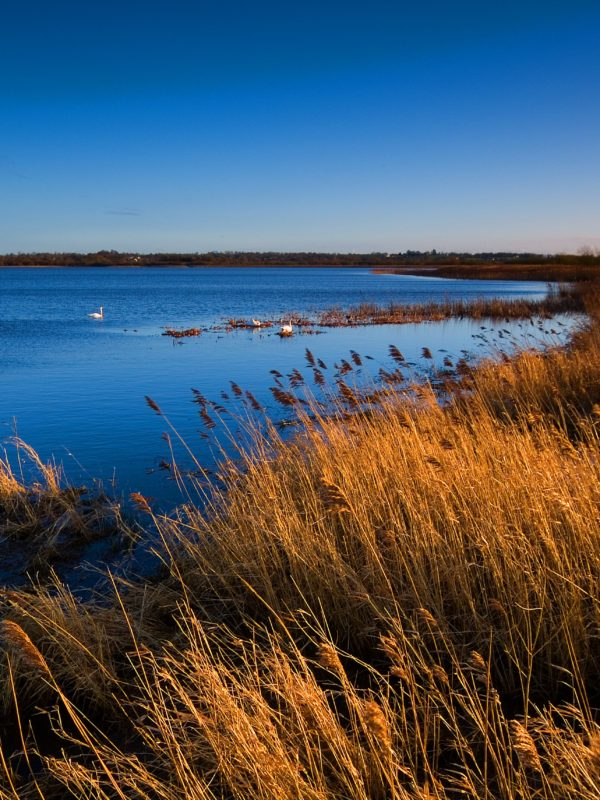 Lough Neagh Wetlands