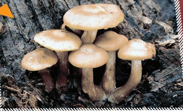 Fungal Foray