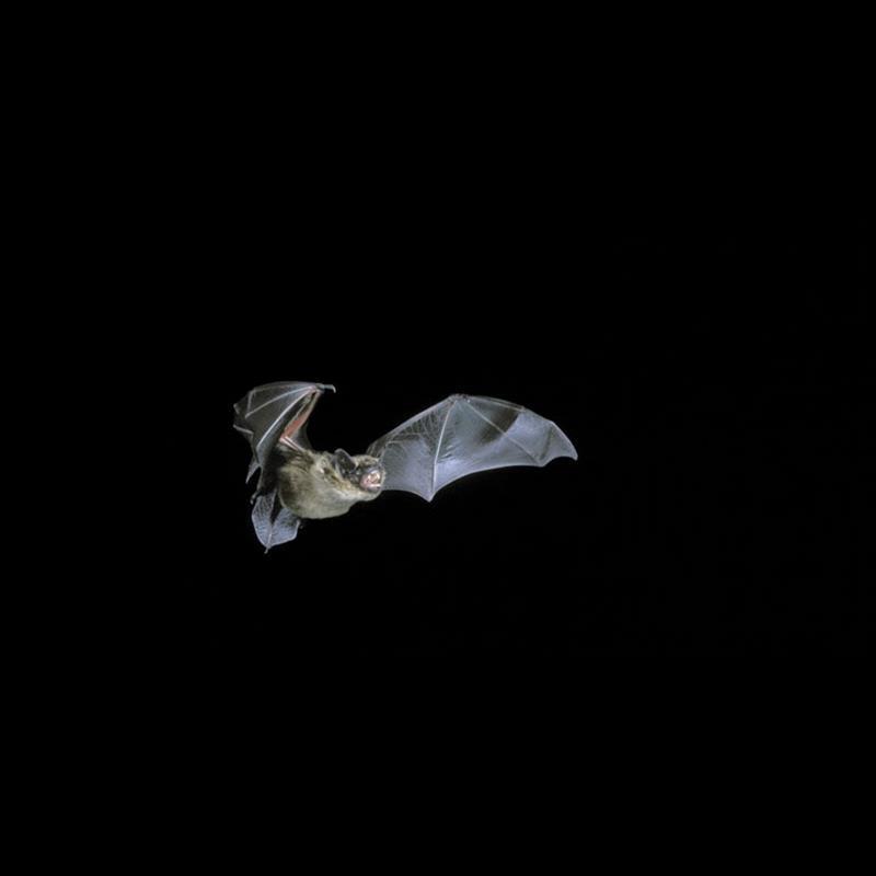 Bat Night at Ardress House