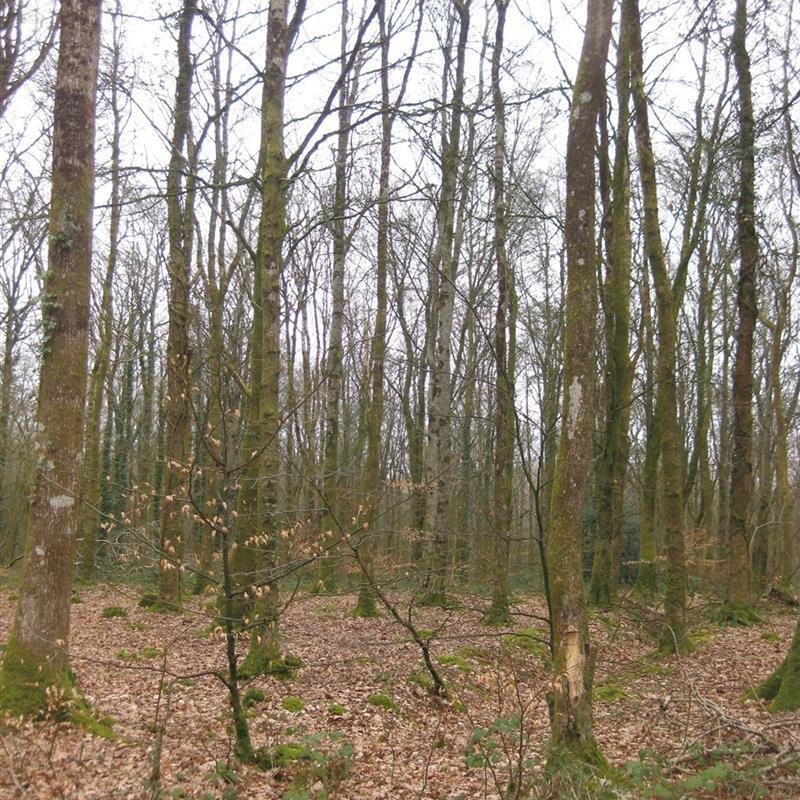 Derrynoyd Wood Trail