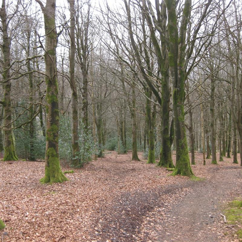 Moydamlaght Forest - Medium Trail