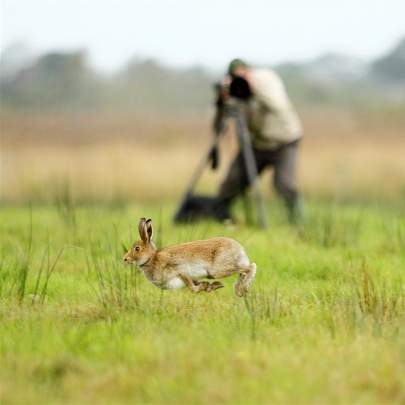 Irish Hare Photography